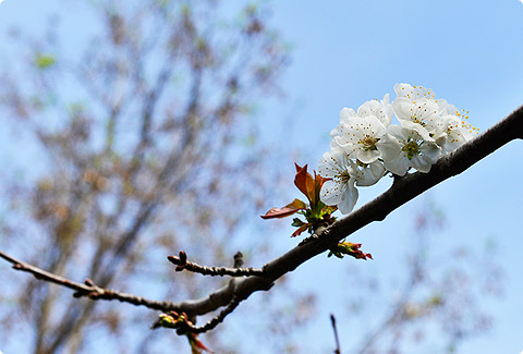 photo_1072.jpg