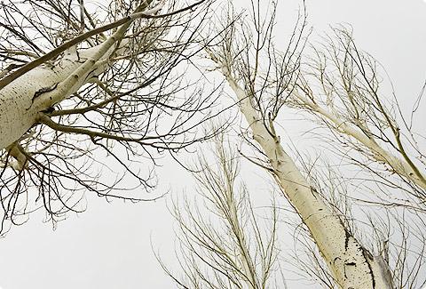 photo_1091.jpg
